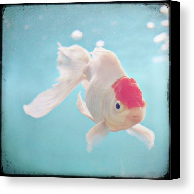 Horizontal Canvas Print featuring the photograph Fish In The Sea by photo by Anna Theodora