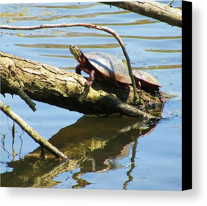 Mother And Baby Turtle Canvas Print featuring the photograph Mother's Day by Todd Sherlock