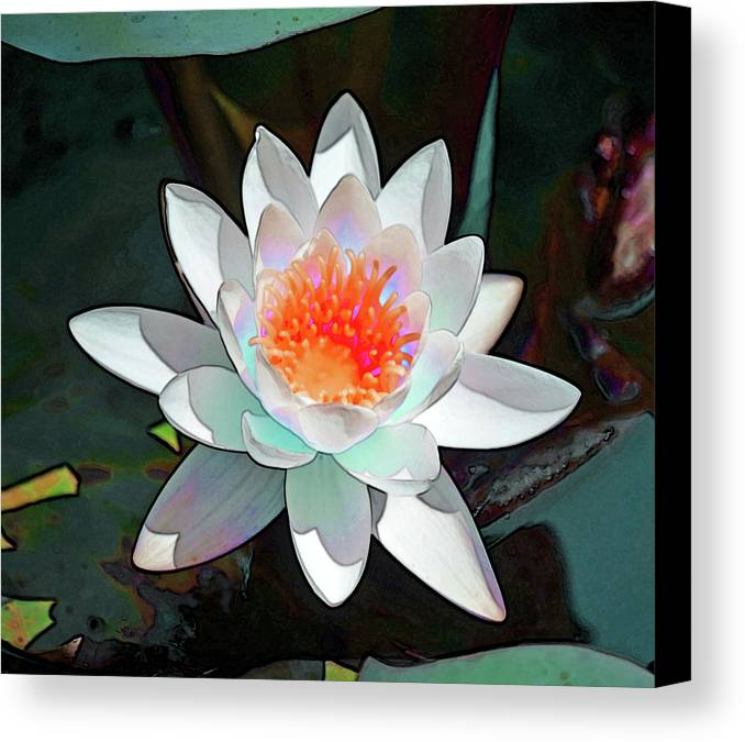 Waterlily Canvas Print featuring the photograph Abstract Waterlily by Karen Black