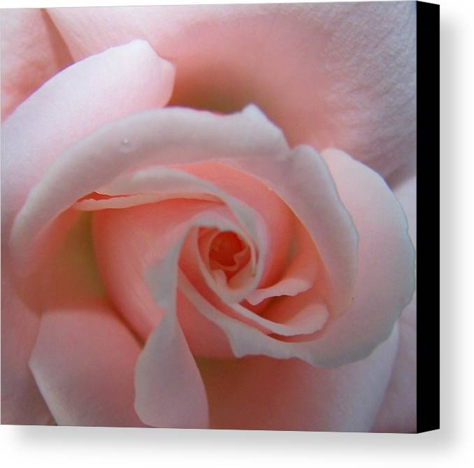 Pink Canvas Print featuring the photograph I Love Pink by Vijay Sharon Govender