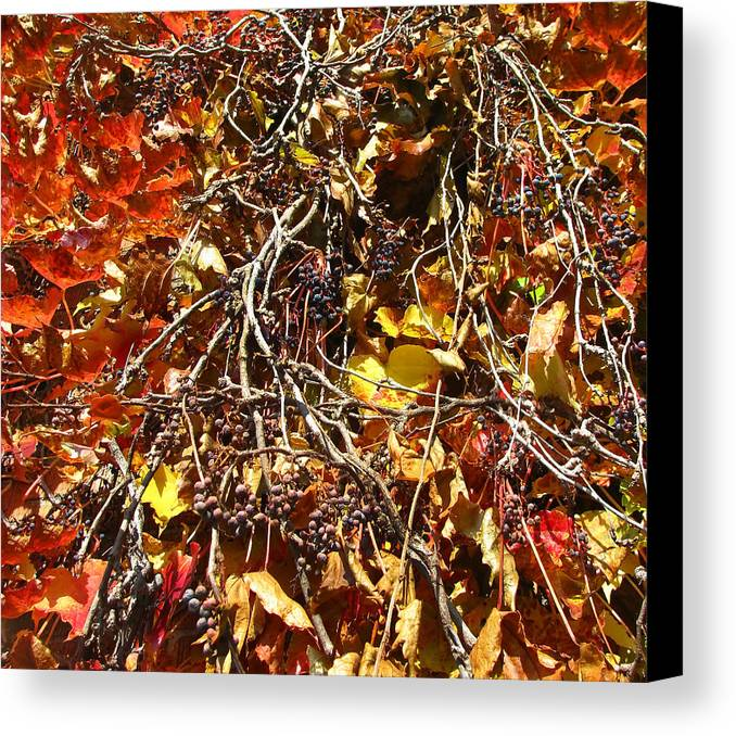 Plant Canvas Print featuring the photograph Ivy by Mary Lane