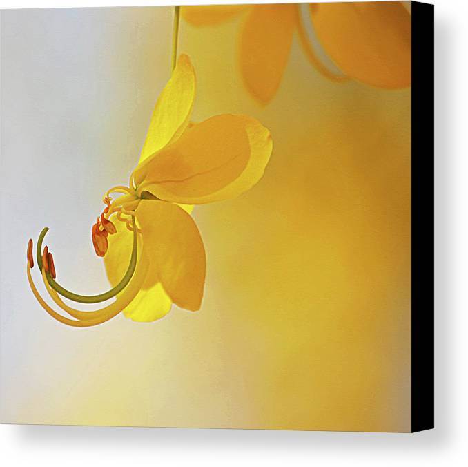 Horizontal Canvas Print featuring the photograph Laburnum by Ana Encinas