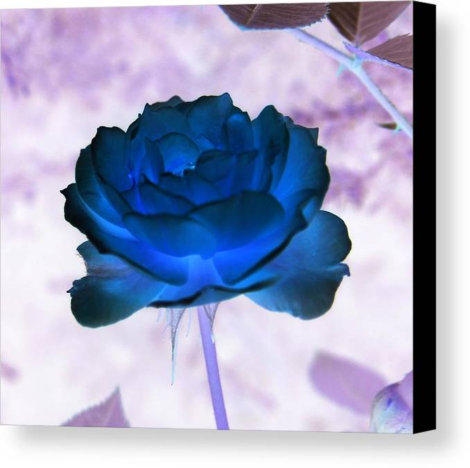 Abstract Canvas Print featuring the photograph Rose In Full Bluem by Erika Lesnjak-Wenzel