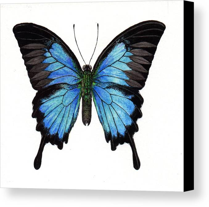 Butterfly Canvas Print featuring the painting Sapphire by Yen Shu Liao