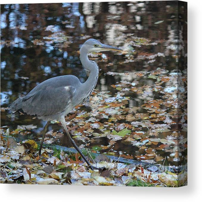 Herons Canvas Print featuring the photograph Heron On The River by Four Hands Art