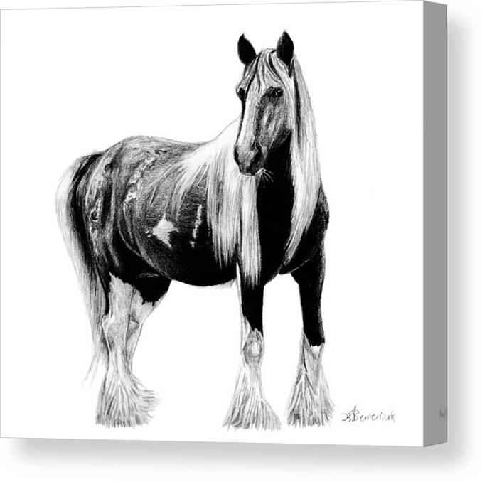 Draft Canvas Print featuring the drawing Draft Horse by Kayleigh Semeniuk
