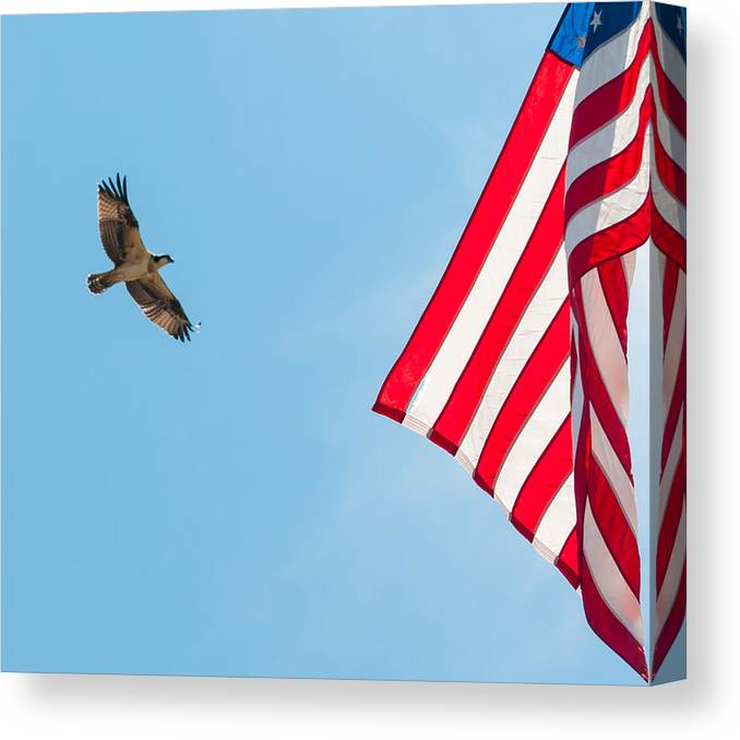 Osprey Canvas Print featuring the photograph Osprey Flag by J H Clery