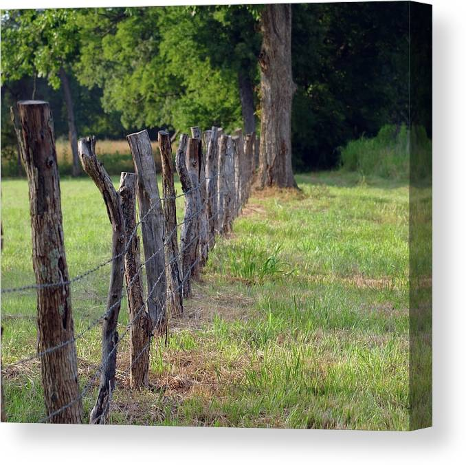 Fence Canvas Print featuring the photograph Keeping The Cows At Home by Diane Luke