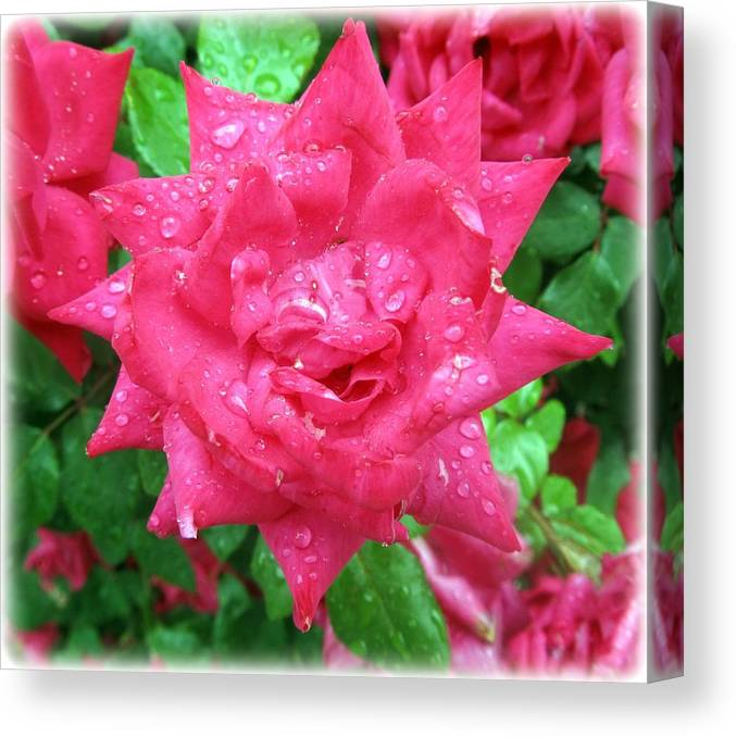 Rose With Rain Drops Canvas Print featuring the photograph Tears From Heaven by Juanita Morton