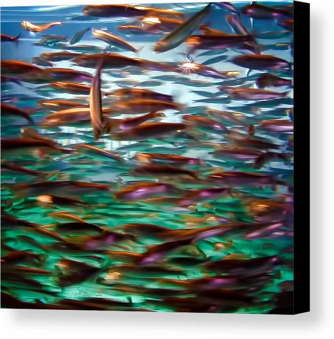 Fish Canvas Print featuring the photograph Fish 1 by Dawn Eshelman