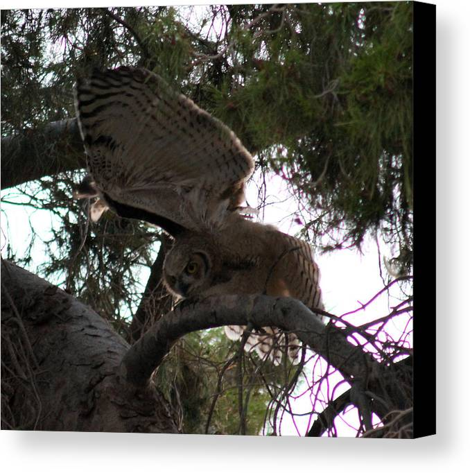 Owls Canvas Print featuring the photograph Hello by Kathleen Nash