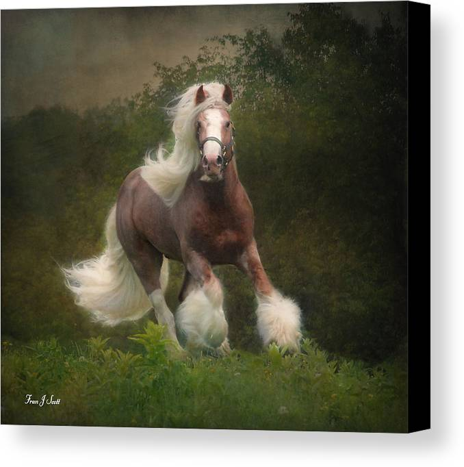 Horses Canvas Print featuring the photograph Simon And The Storm by Fran J Scott