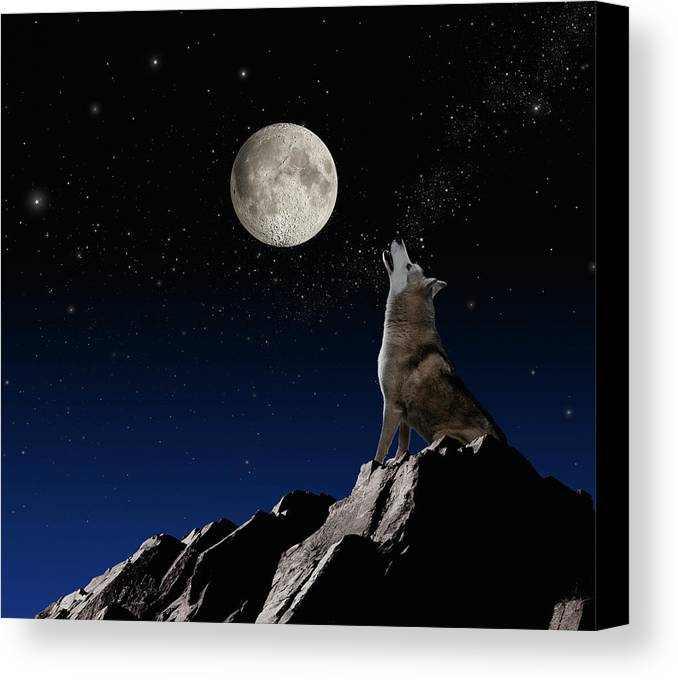 Horizontal Canvas Print featuring the photograph Wolf Howling At Moon by John Lund