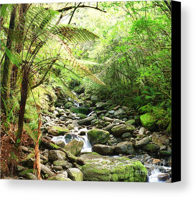 Native Canvas Print featuring the photograph Native Bush by MotHaiBaPhoto Prints