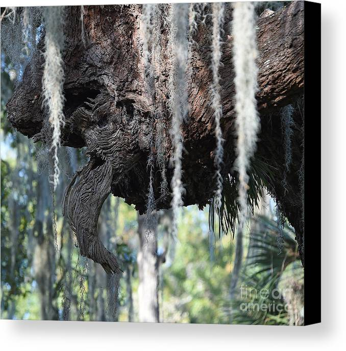 Canvas Print featuring the photograph 7850 by Don Solari