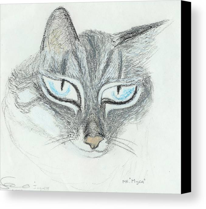 Cat Canvas Print featuring the drawing All Eyes by Ingrid Szabo