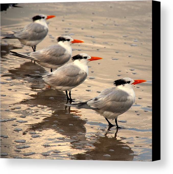 Wildlife Canvas Print featuring the photograph All Lined Up by Susanne Van Hulst
