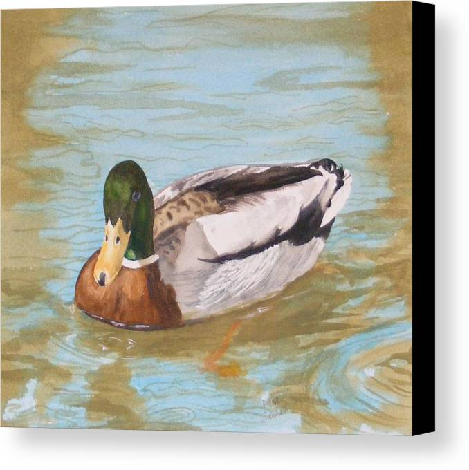 Duck Mallard Water Canvas Print featuring the painting Mallard Drake by Diane Ziemski