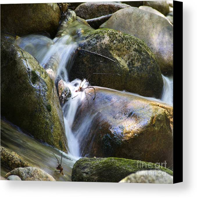 Rocks Canvas Print featuring the photograph Rocky Water Closeup by Michael Mooney