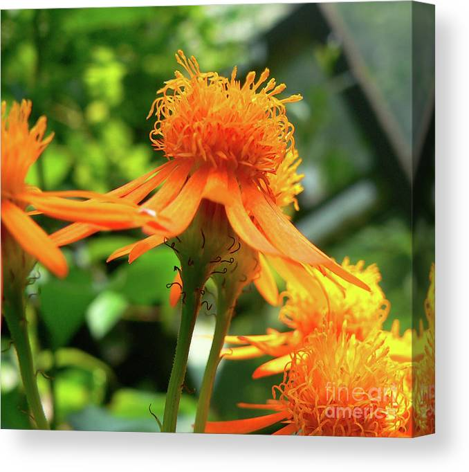 Flower Canvas Print featuring the photograph Flower Top by Angela Wright