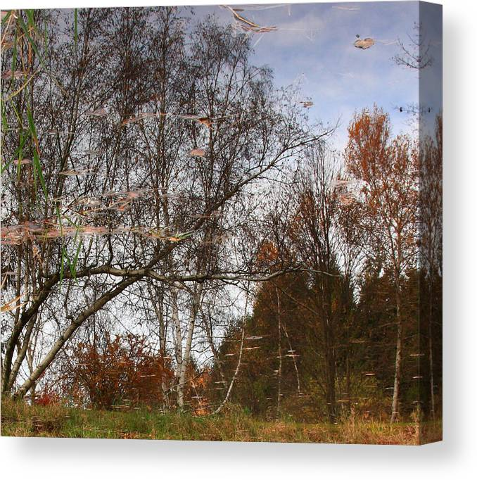 Nature Canvas Print featuring the photograph Rheinstrom Trees With A Twist by Larry Federman