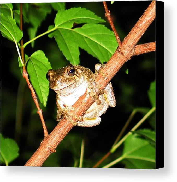 Toad Canvas Print featuring the photograph Tree Toad Night by Tamara Stickler