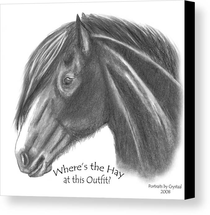 Clydesdale Canvas Print featuring the drawing Clydesdale by Crystal Suppes