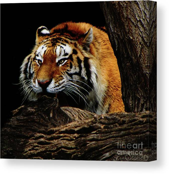Tiger Canvas Print featuring the photograph Ready Or Not by September Stone