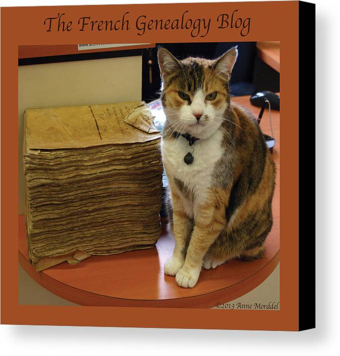 Cats Canvas Print featuring the photograph Archives Cat With Fgb Border by A Morddel