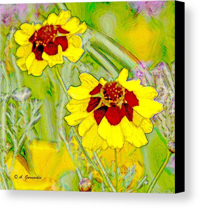 Daisy Family Canvas Print featuring the photograph Coreopsis Flowers by A Gurmankin