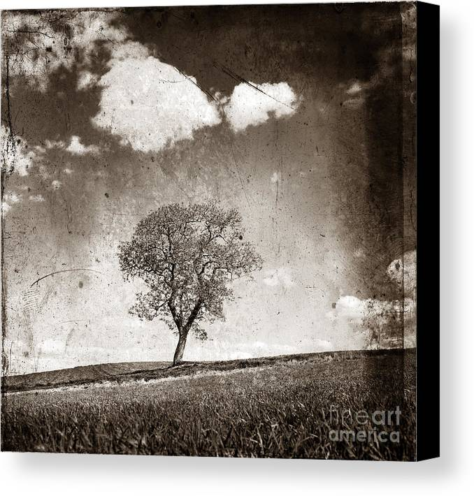 Alone Auvergne Botany Countryside Day Daylight Daytime During Europe European Exterior Exteriors Flora France French Hill Hills Hilly In Landscape Landscapes Limagne Lone Nature Nobody One Outdoor Photo Photos Plant Plants Rolling Scenery Scenic Separate Separately Shot Shots Single Singly Sole Solitary The Tree Trees; Textured; Canvas Print featuring the photograph Solitary Tree In Limagne Landscape. Auvergne. France by Bernard Jaubert