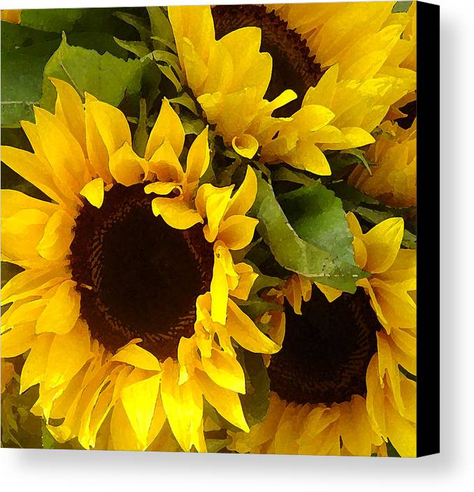 Sunflowers Canvas Print featuring the painting Sunflowers by Amy Vangsgard