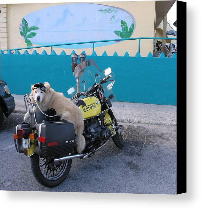 Motercycle Canvas Print featuring the photograph Dogs Rule by Jim Derks