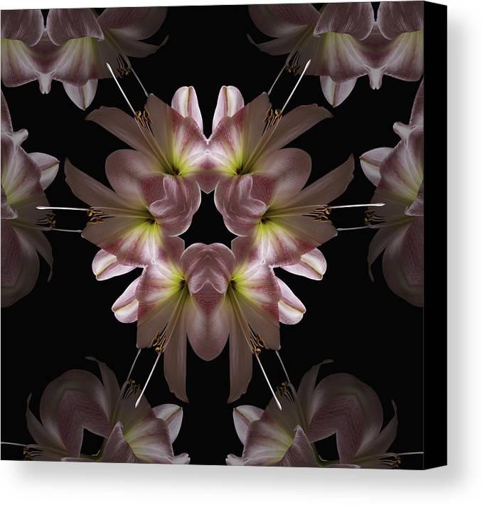 Mandala Canvas Print featuring the digital art Mandala Amarylis by Nancy Griswold