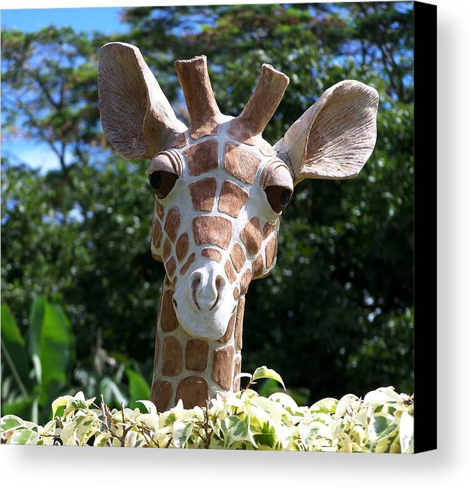 Hawaii Canvas Print featuring the photograph Oahu Giraffe by Michael Lewis