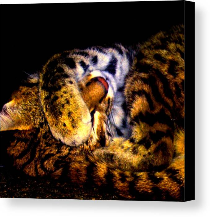 Cat Canvas Print featuring the photograph Zoo Baby by Misty VanPool
