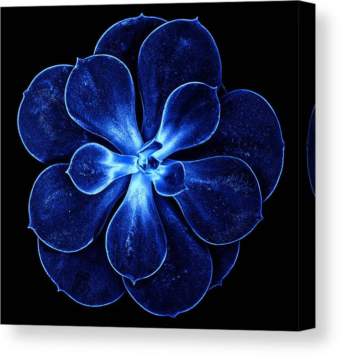 Abstract Canvas Print featuring the photograph Abstract Flower by Lijie Zhou