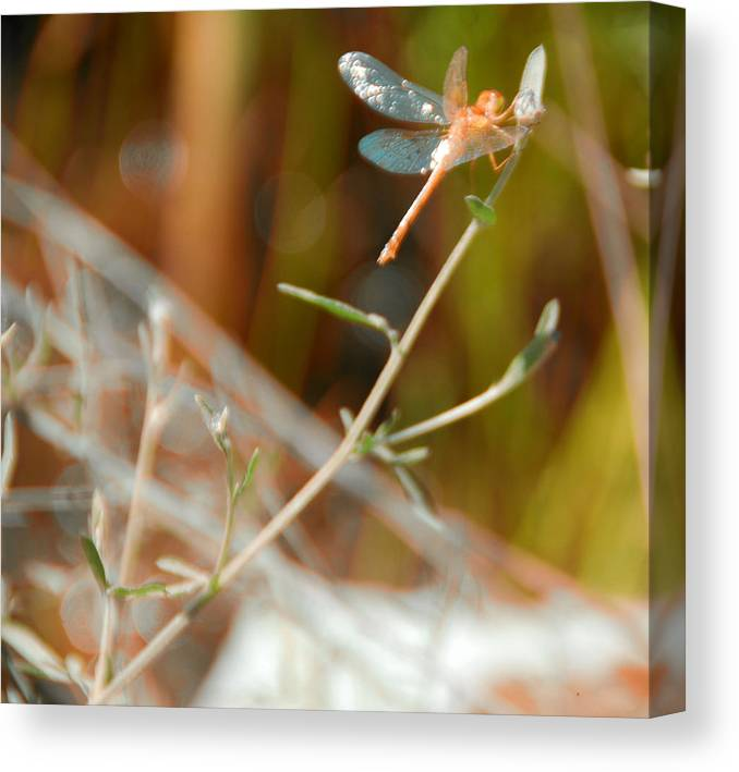 Bokeh Canvas Print featuring the photograph Bokeh And Some by Chris Hartman Price