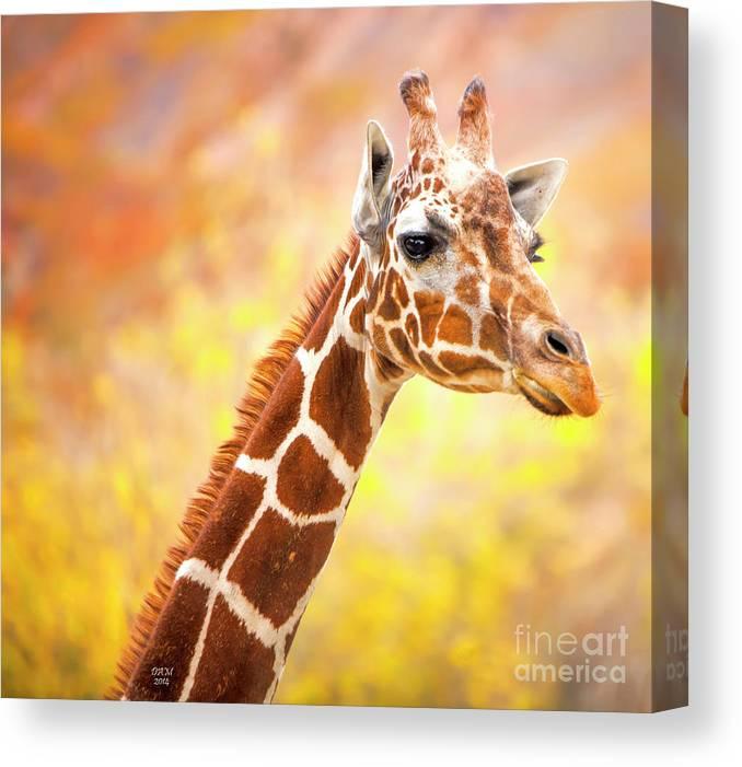 Giraffe Canvas Print featuring the photograph Giraffe, Animal Decor, Nursery Decor, by David Millenheft