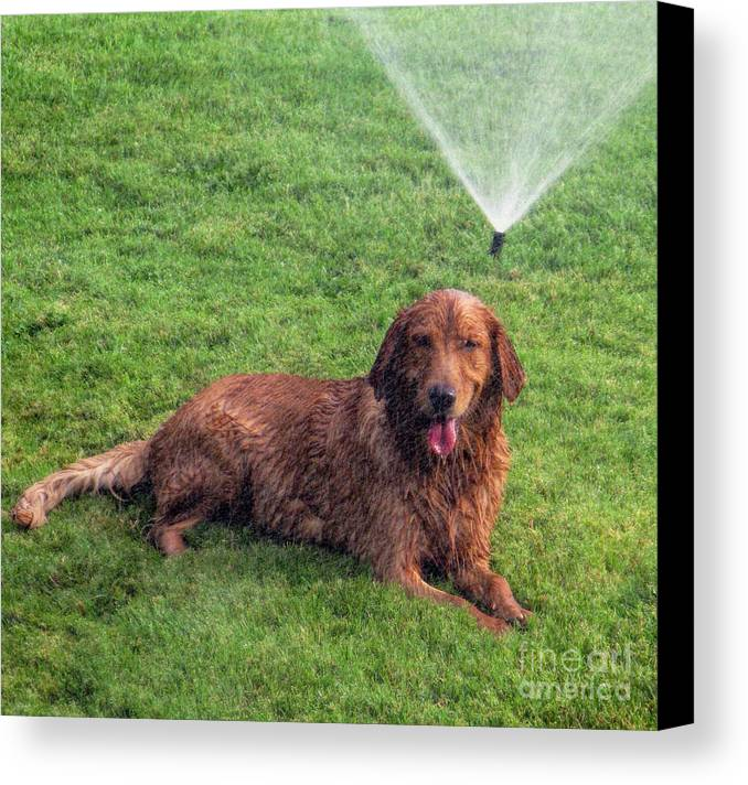 Dog Canvas Print featuring the photograph Dog Days Of Summer by Tammy Espino