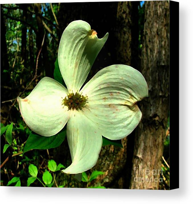 Dogwood Blossom Canvas Print featuring the photograph Dogwood Blossom I by Julie Dant