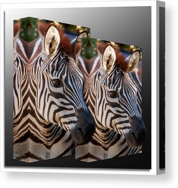Zebras Canvas Print featuring the photograph Dizebria by Robert Schwarztrauber