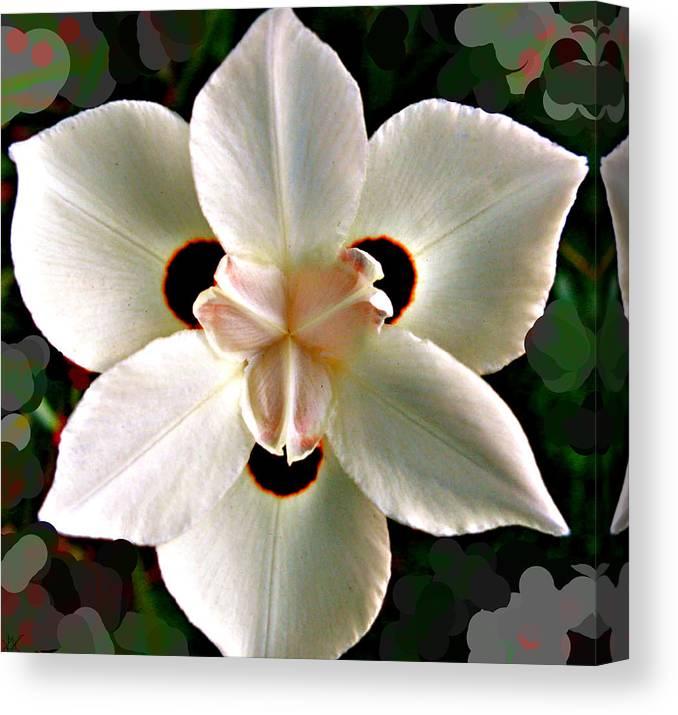 Fluid Flower Canvas Print featuring the photograph Fluid Flower by Debra   Vatalaro