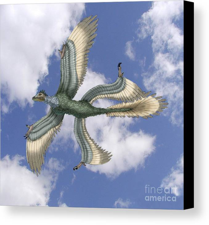 Illustration Canvas Print featuring the photograph Microraptor by Spencer Sutton