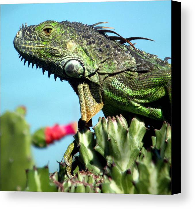 Reptiles Canvas Print featuring the photograph To The Point by Karen Wiles
