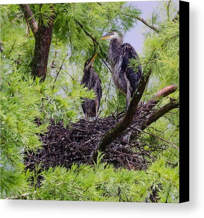 Bird Canvas Print featuring the photograph Birds by Karen Hart