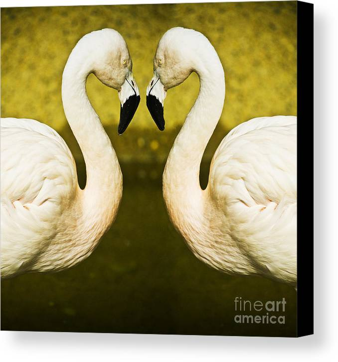 Flamingo Canvas Print featuring the photograph Flamingo Reflection by Sheila Smart Fine Art Photography