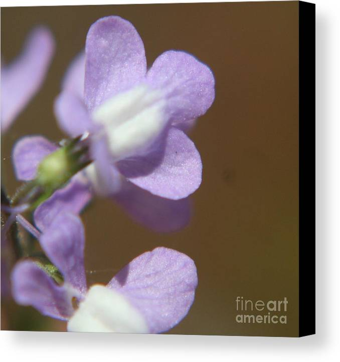 Weeds Canvas Print featuring the photograph Tip Of The Weed by Amy Holmes
