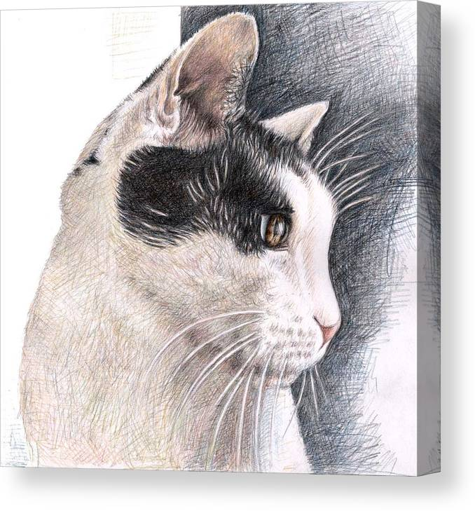 Cat Canvas Print featuring the drawing Cats View by Nicole Zeug