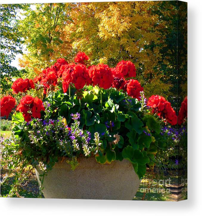Geranium Canvas Print featuring the photograph Geraniums by Cristina Stefan